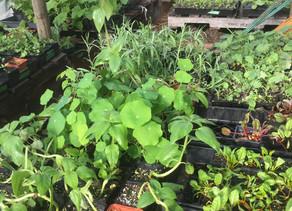 Nurture in Nature Plant Sale!