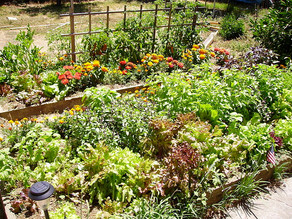 What is Permaculture Anyway?