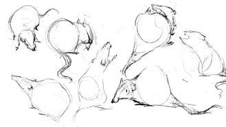 Live Rat Sketching
