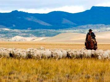 Provincias patagónicas buscan mayores beneficios productivos