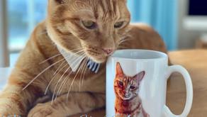 猫のルイ君近況報告とルイグッズ販売のご案内!