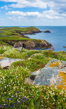 Grass and Sea