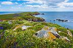 Lush Ocean scenery