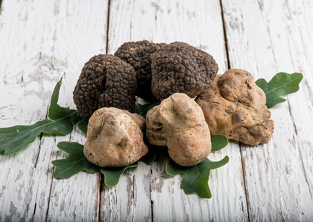 group-of-white-and-black-truffle--1200x8