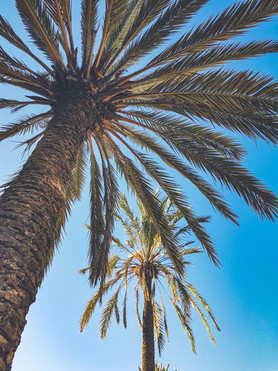 Palm trees in Valencia