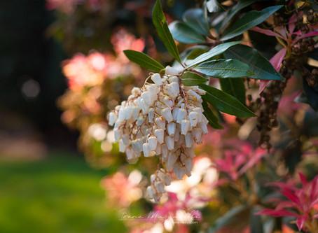 De lente is begonnen, een kijkje op iets positiefs in deze bijzondere tijd.