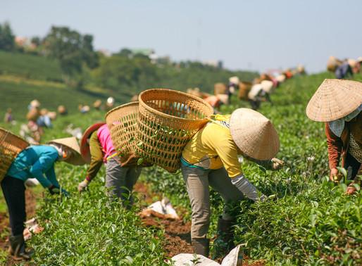 Siaran Pers | Urgensi Manajemen Risiko Bencana Alam dan Asuransi Pertanian di Indonesia
