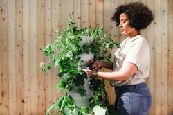 lettuce-grow-z4S0MYNYT08-unsplash