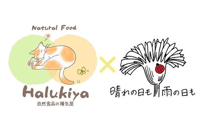 Halukiya×晴れの日も雨の日もコラボ画像.jpg