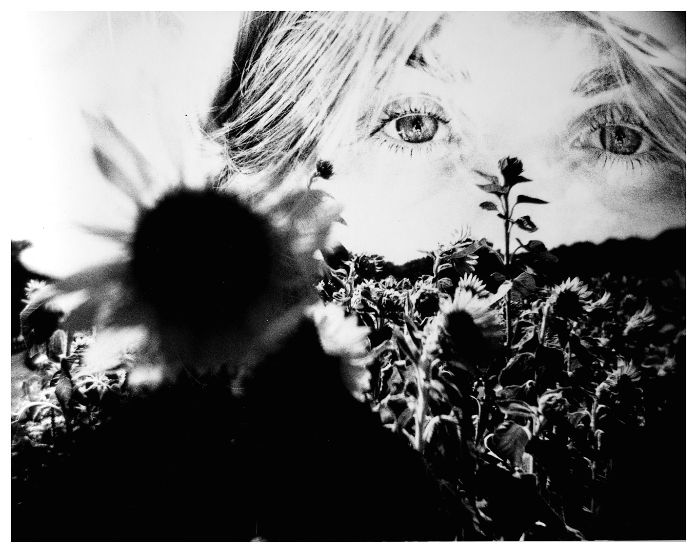 In The Sunflower's Afternoon