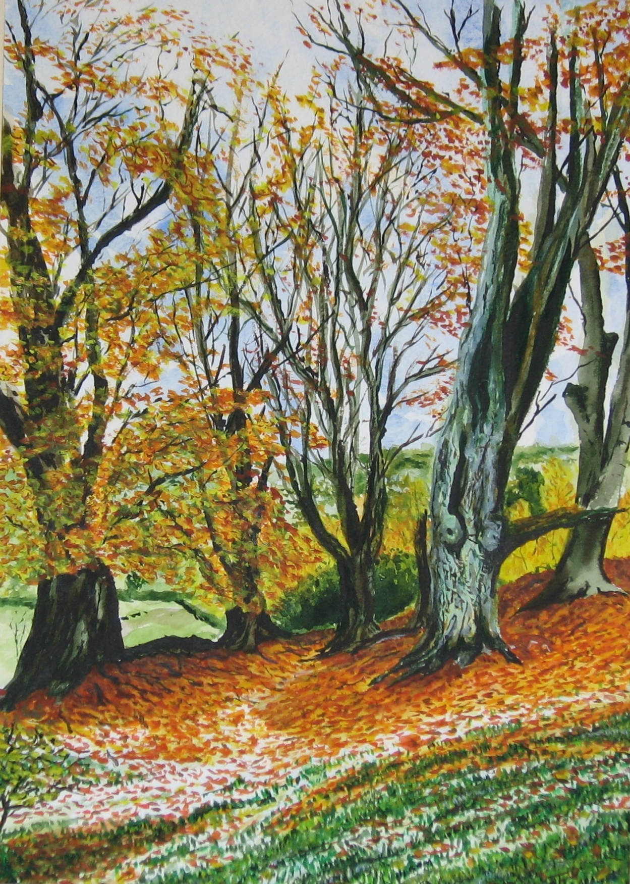 Beech Hanger in Autumn