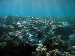 Abrolhos Islands (off Geraldton WA)