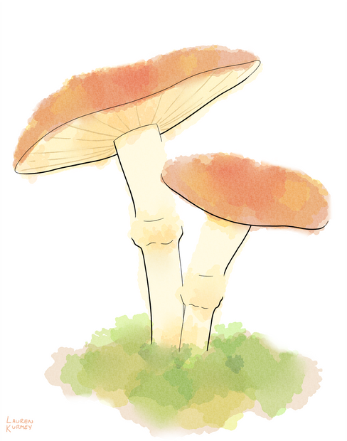 368 mushrooms sm.png