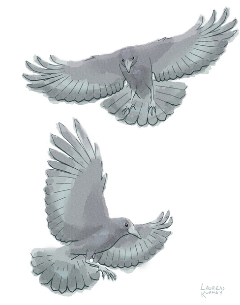 403 Crows sm.png
