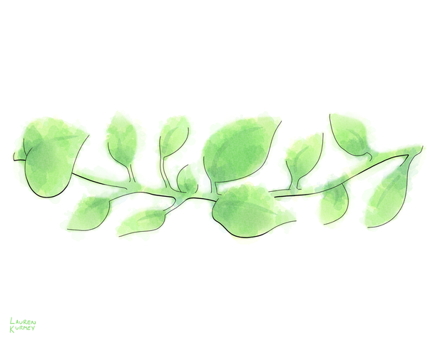 364 branches sm.png