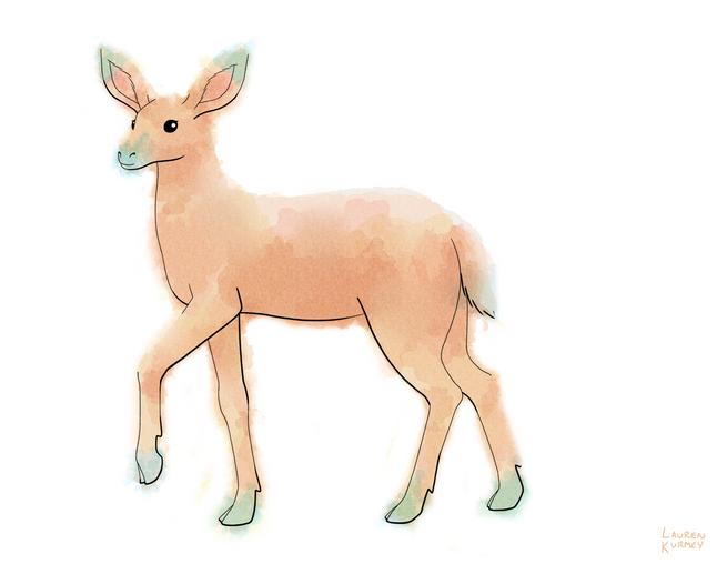 364 deer sm.png