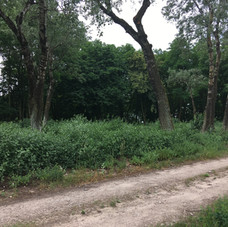 Site of Przechowka cemetery