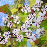 Cherry Blossoms sm.jpg