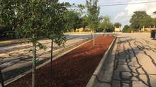 Front Entrance Landscape + Yard of the Month