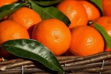 I ricercatori del CREA di Acireale hanno ottenuto nuovi ibridi di mandarino e pompelmo