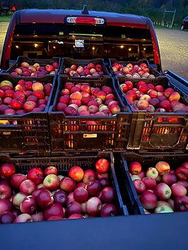 Truck of School Apples.jpg