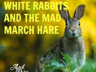 WHITE RABBITS AND THE MAD MARCH HARE