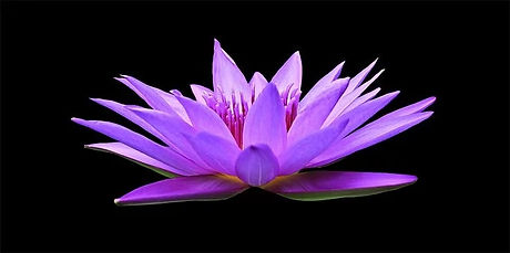 water-lily-1592771__340.jpg