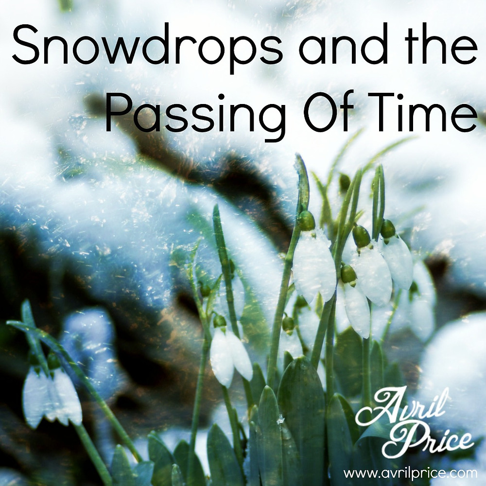 Snowdrops Photo (2) ap.jpg