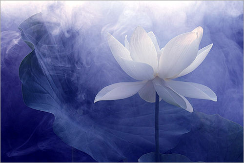 MindLINK Consciousness Medicine