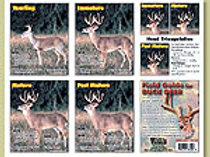 Field Guide for Buck Deer Poster