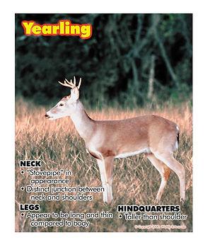 Field Guide for Buck Deer