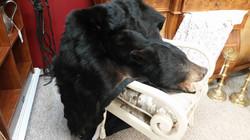 MinnesotaBlack Bear
