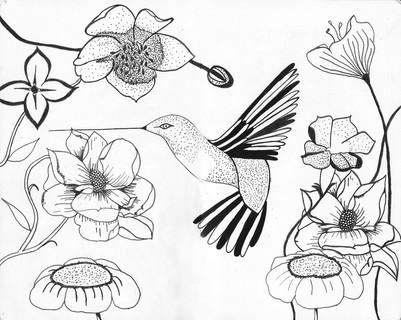 dessin ccpictures