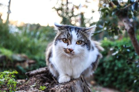 cat nature ccpictures