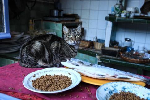 cat ccpictures