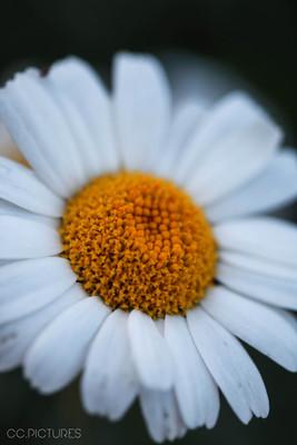 fleur nature ccpictures