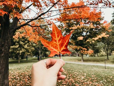 Un souffle écolo sur le ramassage des feuilles