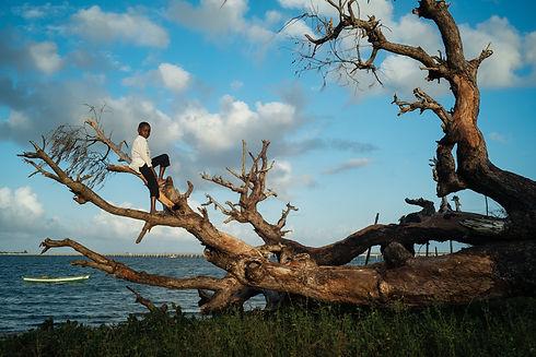 Child in dead tree.jpg