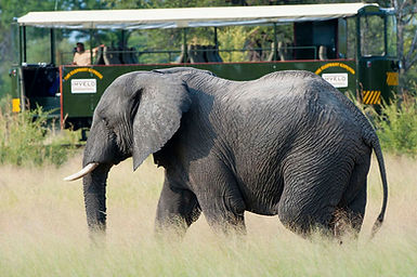 elephant express - great game viewing op