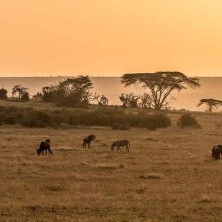 Cocoon Lerai Safari Camp Masai Mara Imag