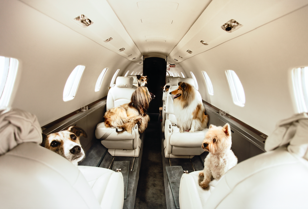 Pets on Planes with Flitestar.png