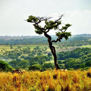 Quais são os biomas nacionais e por que eles são tão importantes?