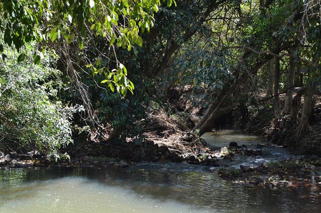 A foto mostra uma parte do rio com plantas em cima da água.