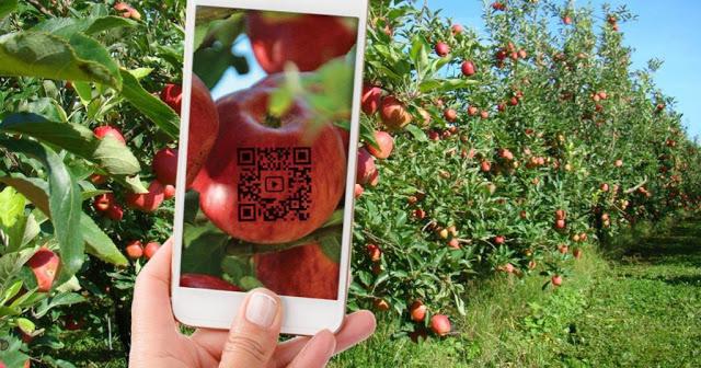 A imagem mostra um celular escaneando um QRCode em uma maça.