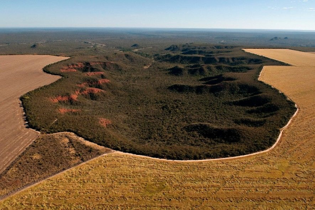 A imagem mostra uma foto aérea do desmatamento do Cerrado. A vegetação nativa e verde está sendo destruída para dar lugar aos pastos e plantações não nativas. A vegetação natural é verde, enquanto o campo desmatado é marrom claro, o que lembra a seca e a morte de um bioma.