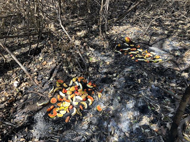 A imagem mostra frutas deixadas no chão queimado. As frutas são para alimentar os animais. Tem banana, laranja, maça e mamão.