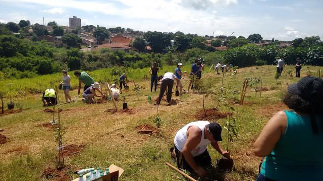 A foto mostra várias pessoas plantando árvores em um campo. O dia está ensolarado, as pessoas estão ajoelhadas cavando a terra. Ao fundo se vê a cidade do alto, com vegetação e prédios.