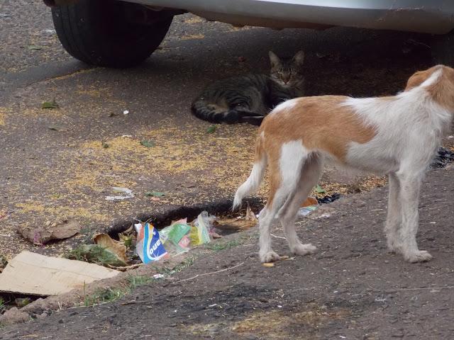 A foto mostra um gato marrom rajado em baixo de um carro. Na sua frente tem um cachorro magro, nas cores branco e caramelo. Na rua que eles estão tem bastante lixo.