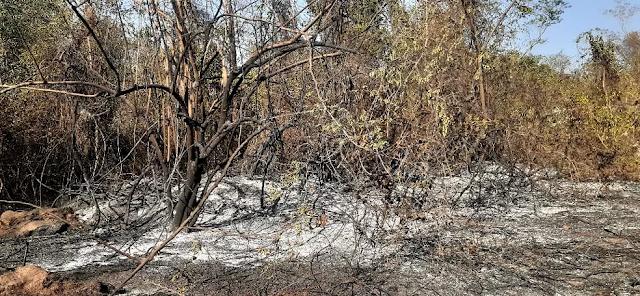 A foto mostra galhos retorcidos e queimados e muitas cinzas no chão.