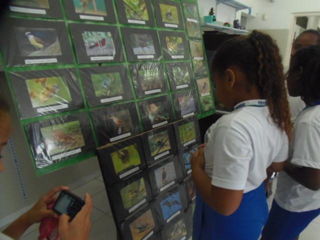 A foto mostra uma criança, menina, negra, de costas, usando uma camiseta branca e calça azul, ela usa um rabo de cavalo cacheado. A menina olha para um mural cheio de fotos. São fotos de animais e plantas nativas da Praia Grande.